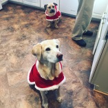 Lucy & Cooper - dressed to impress