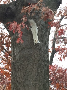 We were way too excited to see a white squirrel!